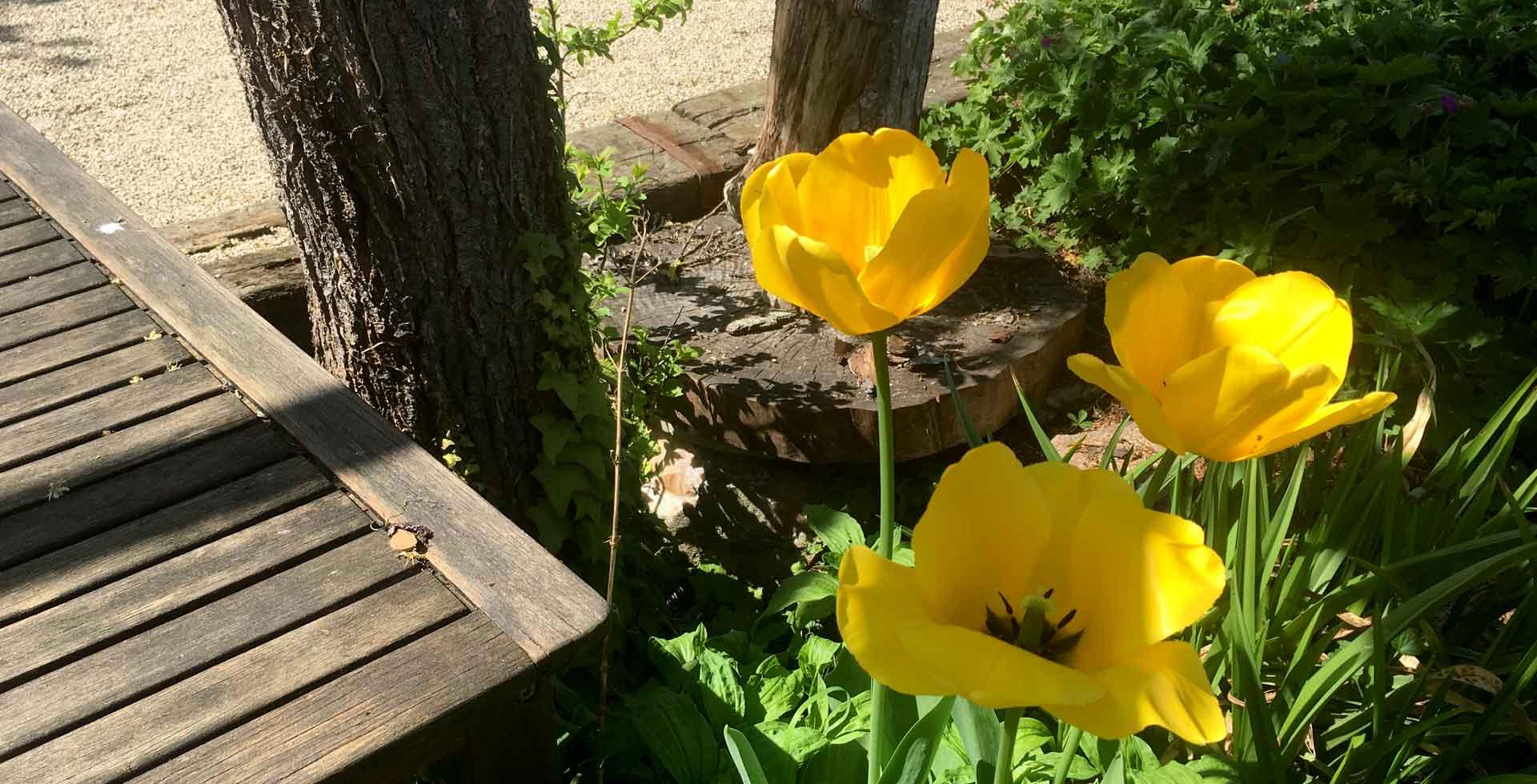 slider3-fleurs-bois-vivert