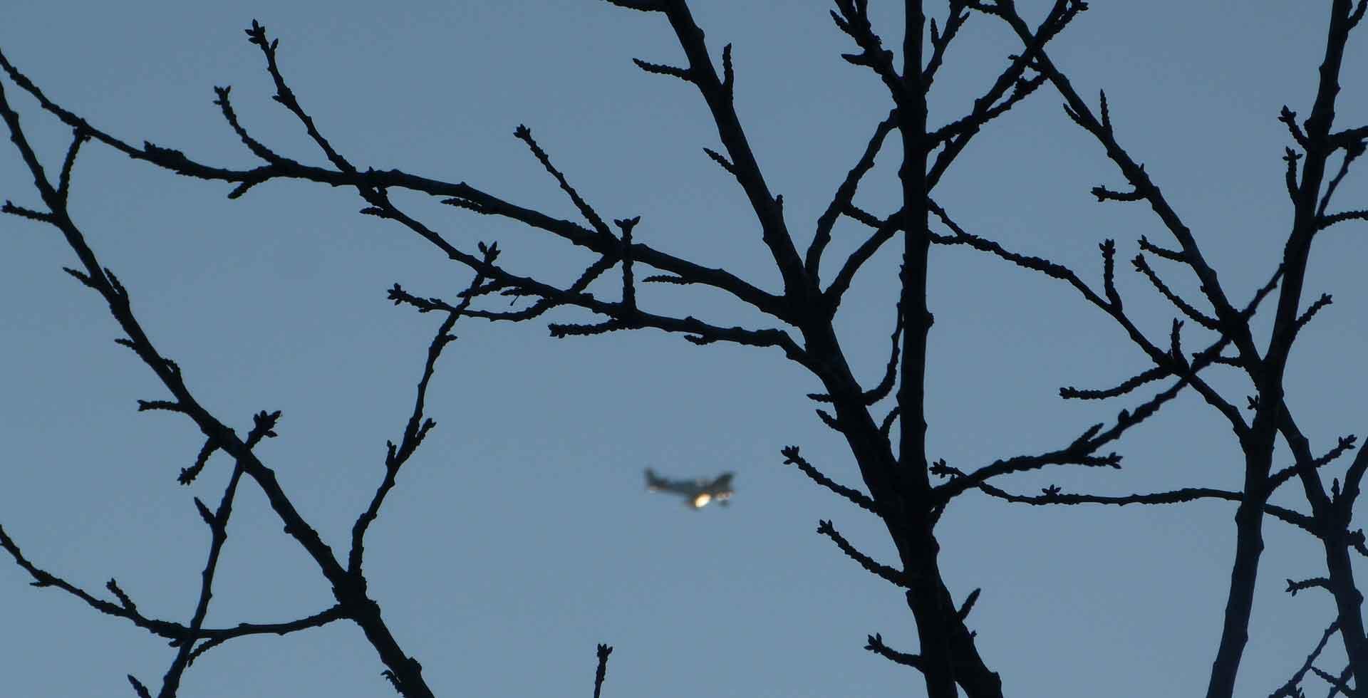 slider4-arbre-avion-ciel-vivert