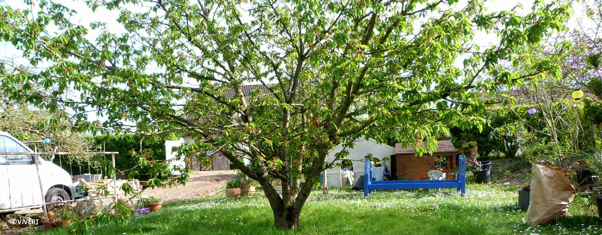 arbres-elagage-vivert