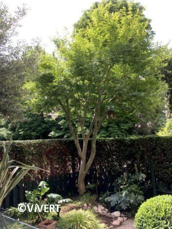 arbres-illustration-vivert