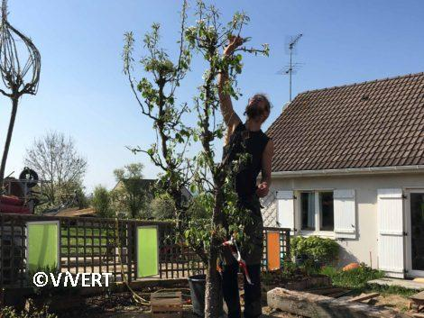 entretien-taille-formation-arbre-fruitier-vivert