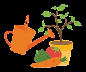 services-plus-arrosage-potager-plante-vivert