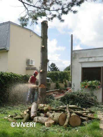 arbres-abattage-vivert