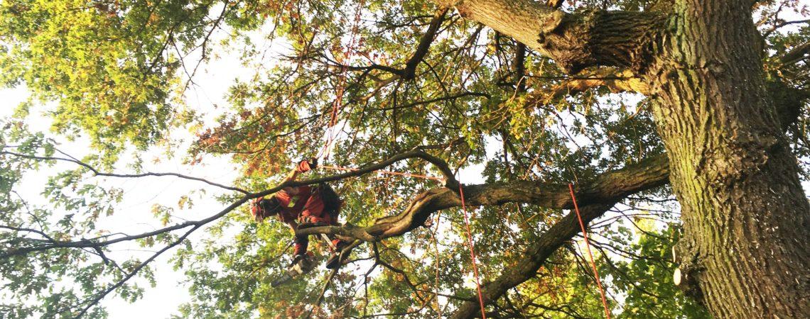 vivien arbre élagage